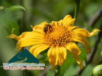 Yellow wild flowers on Moc land
